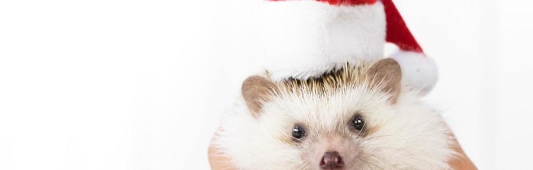 ビジネスで使える! 3つのタイプ別のクリスマスカードの選び方