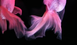 【イベント】art fusion「hikari.」 ~Blue+で写真展を開催するまで
