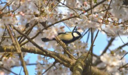 「春うつ」にならないための心と身体のケア