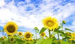 フリーランスのための夏バテ防止法 ~3つの予防策とコワーキングスペースの使い方~