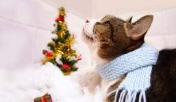 今年の風邪は、のどから! のどを乾燥から守る風邪対策を。
